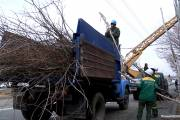 440 damaged and dry trees to be cut down in the capital