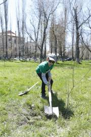 Citywide tree planting action started in the capital since early morning: 7500 trees and bushes to be planted
