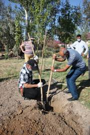 Old trees are a visiting card of a city: three-day seminar on the topic of landscaping in Yerevan